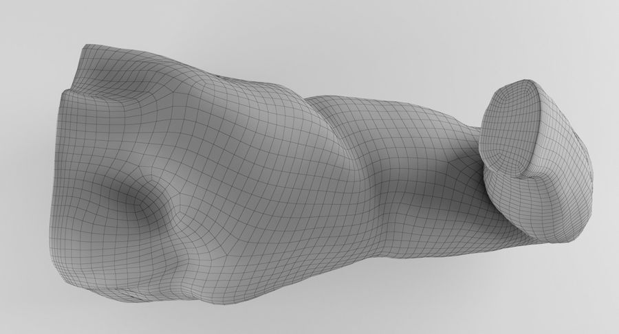 Arm Anatomy royalty-free 3d model - Preview no. 28