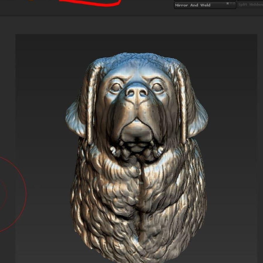 testa di san bernardo royalty-free 3d model - Preview no. 2