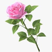 ローズv8_pink 3d model
