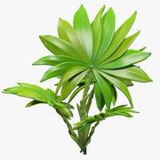 Tropikal Bitki V1 3d model