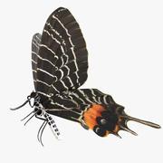 부탄 영광 스 왈 로우 테일 나비 3d model