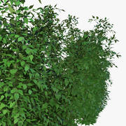 Bushes Hibiscus 3d model
