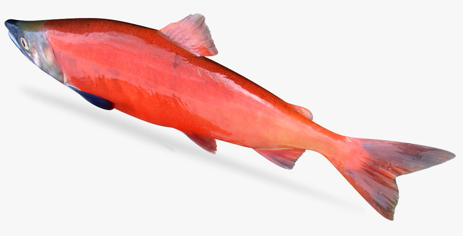 Lachs royalty-free 3d model - Preview no. 4