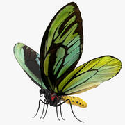 Drottning Alexandras Birdwing Butterfly 3D-modell 3d model