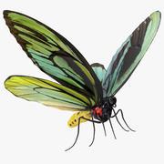 Drottning Alexandras Birdwing Butterfly med päls 3D-modell 3d model