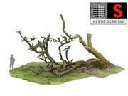 Laurel Forest Tree 16K 3d model