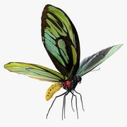 Queen Alexandras Birdwing Butterfly Rigged with Fur 3D Model 3d model