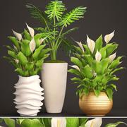 Planta de Spathiphyllum 3d model