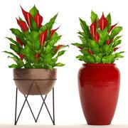 Spathiphyllum RED set 3d model