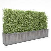 Boxwood - fence 01 3d model