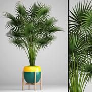 Palm tree(2) 3d model