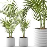 piante 109 3d model