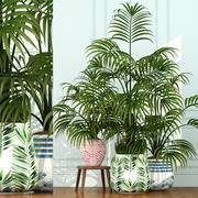 Colección de plantas 51 modelo 3d