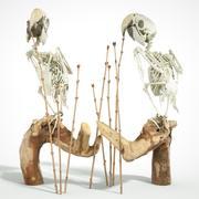 Papegaai skelet 3d model