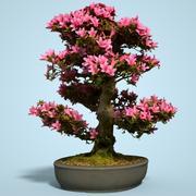 小月盆景树开花2 3d model