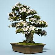 小月盆景树开花1 3d model