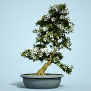 小月盆景树开花3 3d model