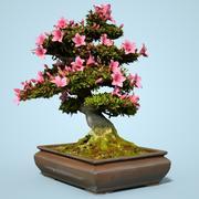 小月盆景树开花5 3d model