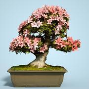 小月盆景树开花6 3d model