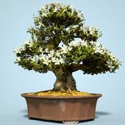 小月盆景树开花7 3d model