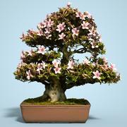 小月盆景树开花8 3d model