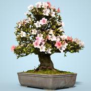 小月盆景树开花9 3d model