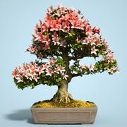 Kwiat drzewa bonsai Satsuki 10 3d model