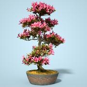 小月盆景树开花11 3d model
