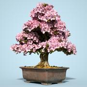 小月盆景树开花14 3d model