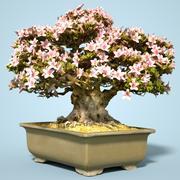 小月盆景树开花15 3d model