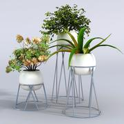 Växt 3d model