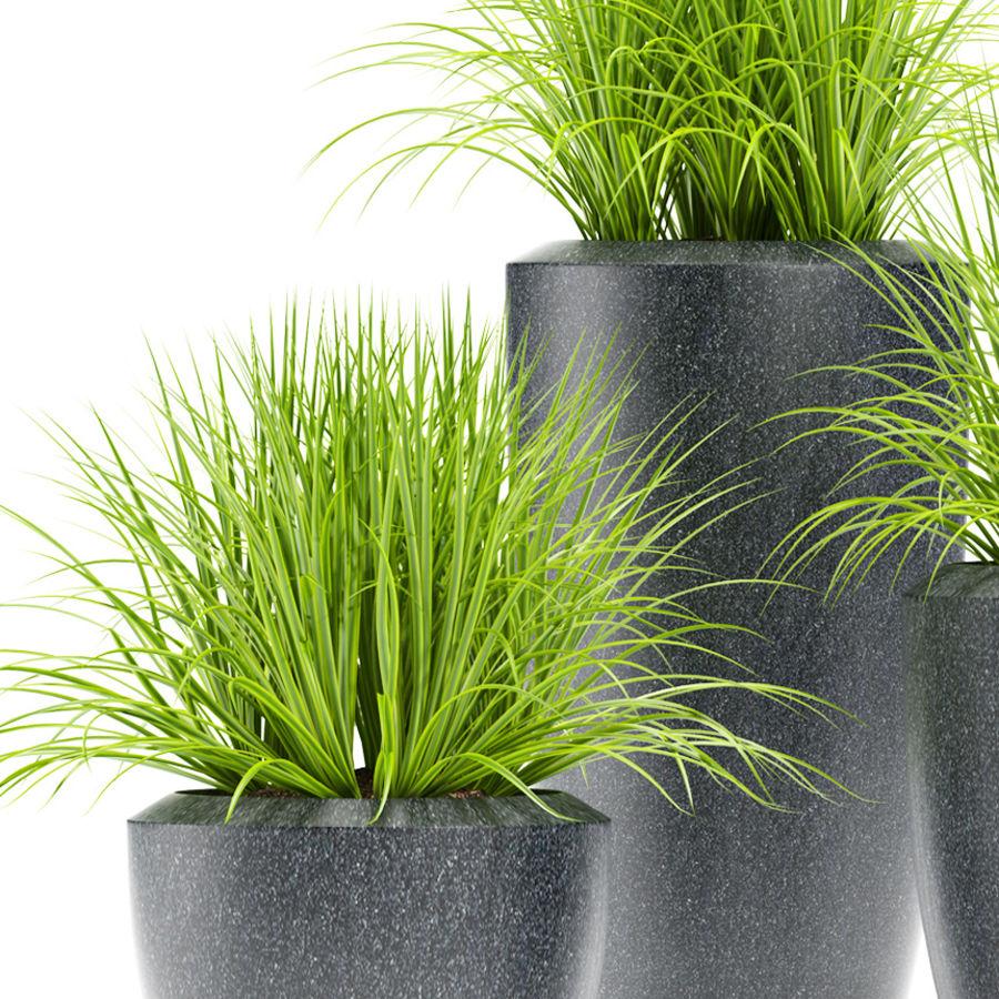잔디 식물 111 royalty-free 3d model - Preview no. 2