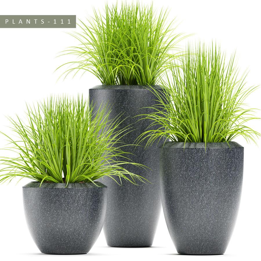 잔디 식물 111 royalty-free 3d model - Preview no. 1