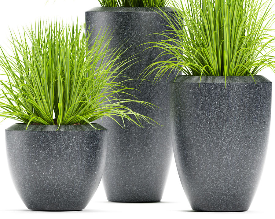 잔디 식물 111 royalty-free 3d model - Preview no. 5