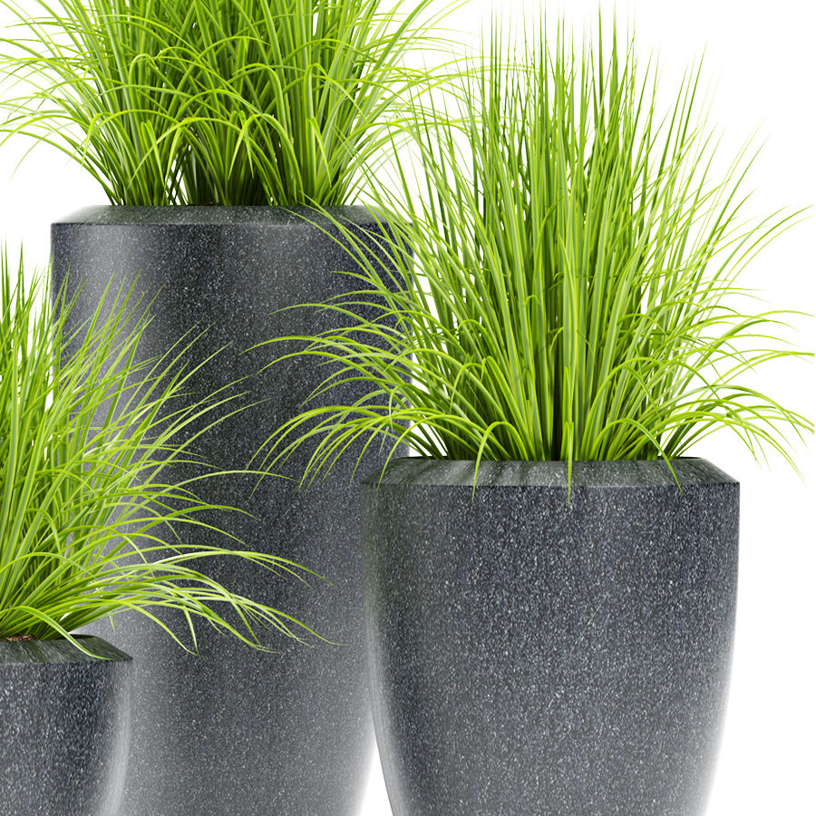 잔디 식물 111 royalty-free 3d model - Preview no. 3