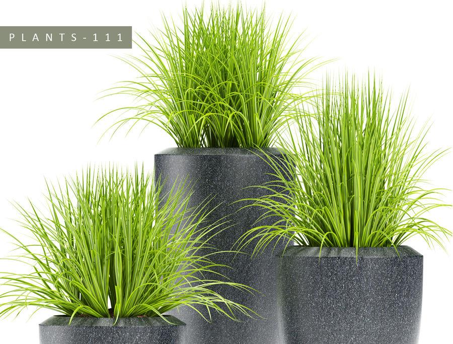 잔디 식물 111 royalty-free 3d model - Preview no. 4