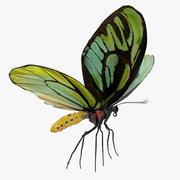 Queen Alexandras Birdwing Butterfly Rigged 3d model