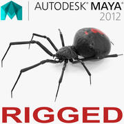 Black Widow Spider Rigged for Maya 3d model