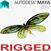 Queen Alexandras Birdwing Butterfly Rigged för Maya 3d model