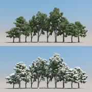 10 + 10 Pinus Brutia 3d model