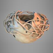 Jądro komórkowe 3d model