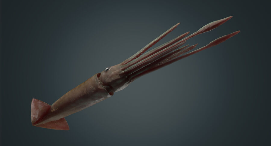 Squid royalty-free 3d model - Preview no. 13