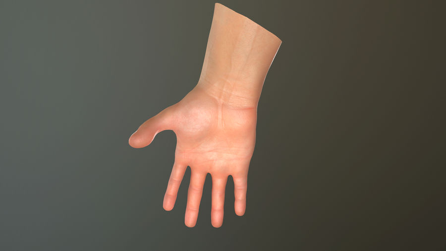 Male Hand PBR Rigged royalty-free 3d model - Preview no. 30