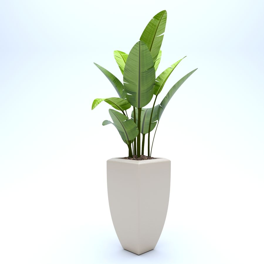 Plant Ficus royalty-free 3d model - Preview no. 3