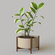 Potplant 3d model