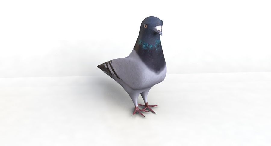 Pigeon royalty-free 3d model - Preview no. 5