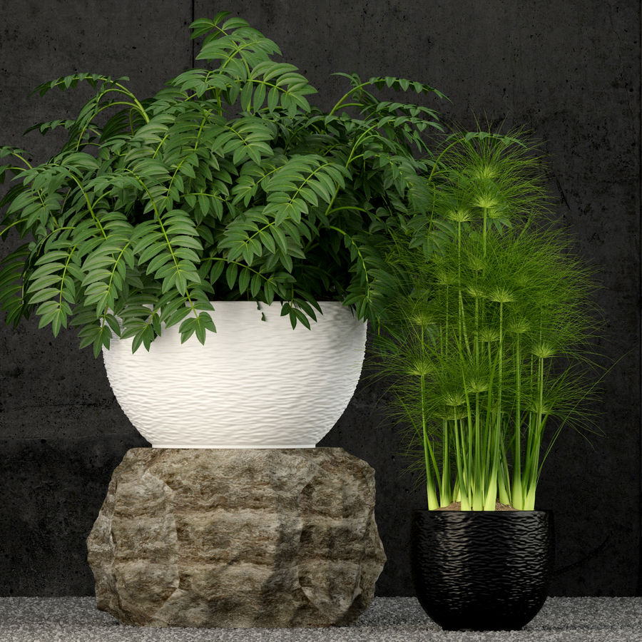 Plants collection 53 royalty-free 3d model - Preview no. 4