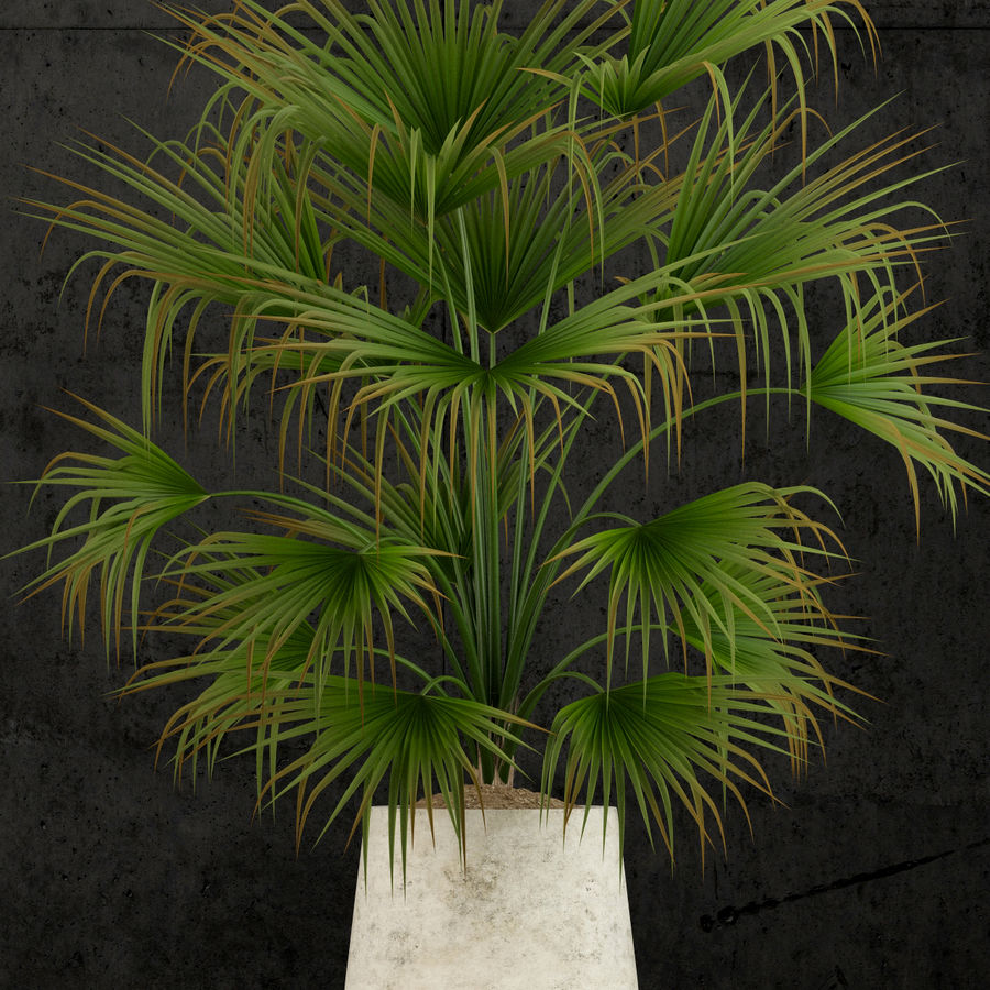 Plants collection 53 royalty-free 3d model - Preview no. 3
