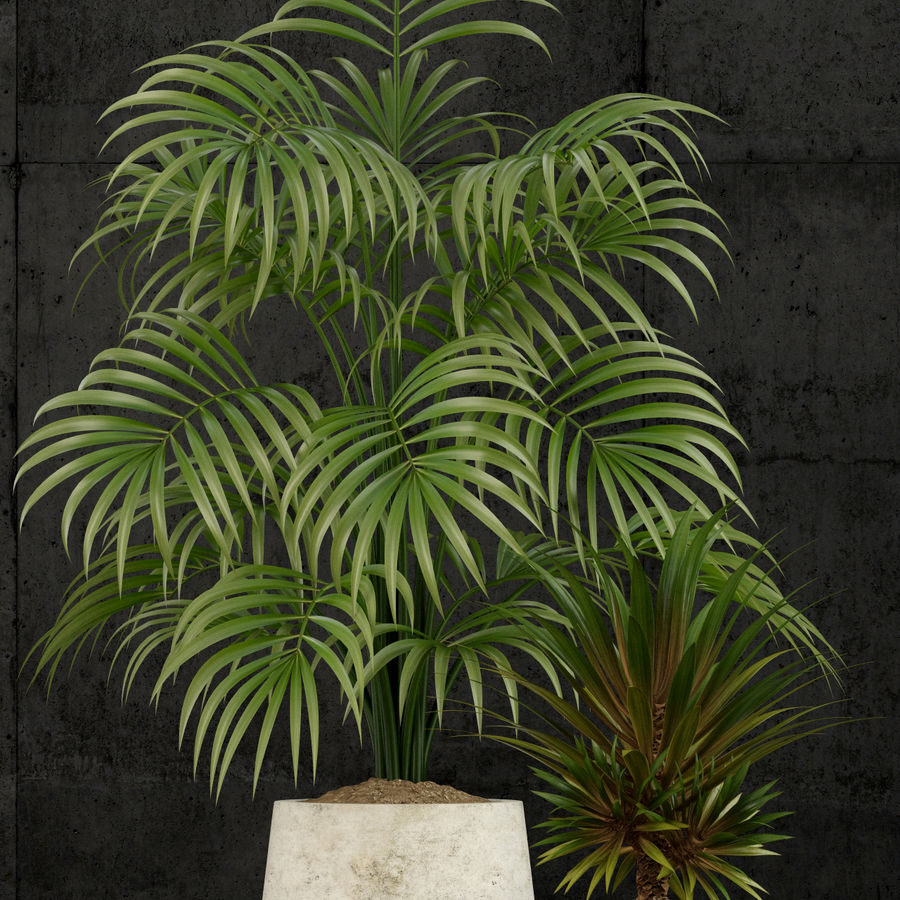 Plants collection 53 royalty-free 3d model - Preview no. 2