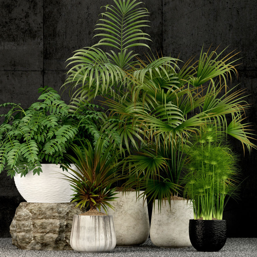 Plants collection 53 royalty-free 3d model - Preview no. 1